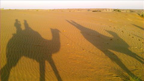 Camel Mirror Image