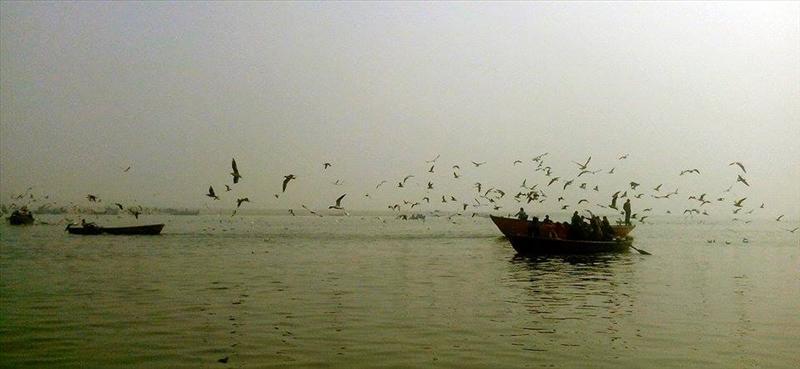 Seagulls of Varanasi