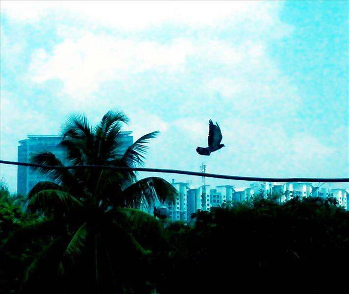 flight in the cool breeze