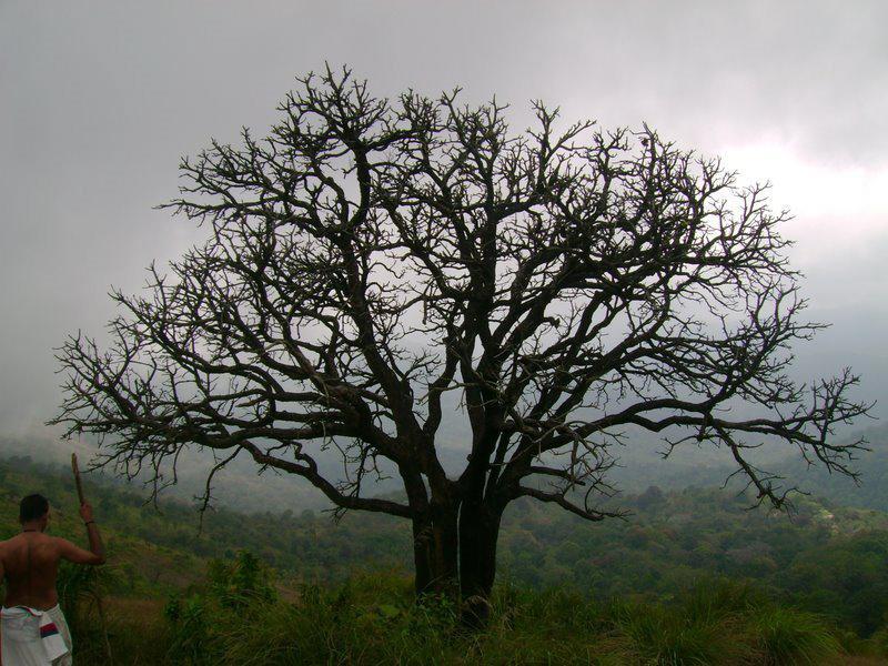 Nelliampathy, Kerala