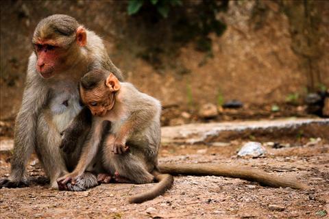 Mom-Son_Monkeys