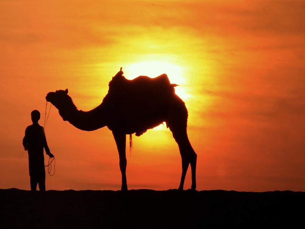 Silhouette Of Jaisalmer