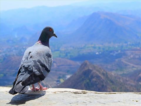 Bird watching his world !!