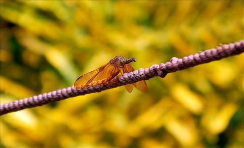 Beautiful Dragon Fly