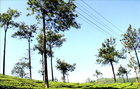Munnar beauty