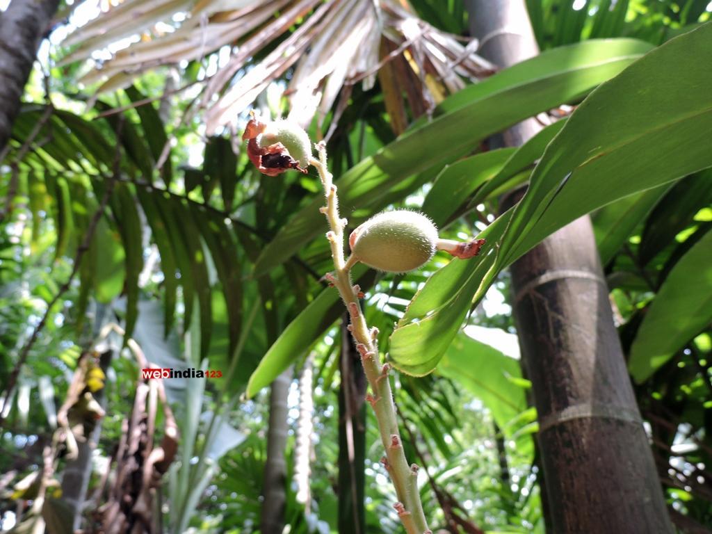 Tropical Spice Plantation, Ponda