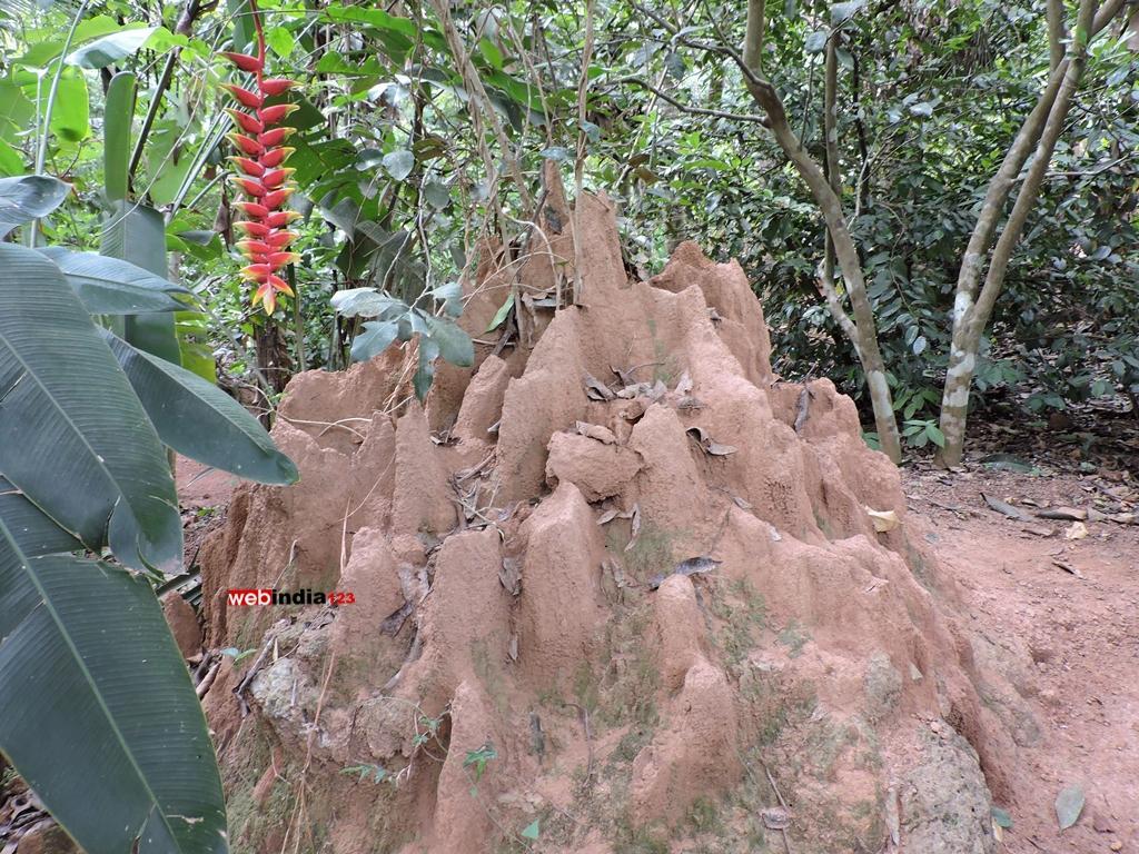 Tropical spice plantation, Goa