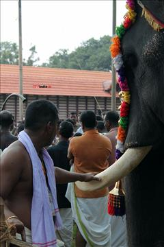 Thrissur Pooram - 2015