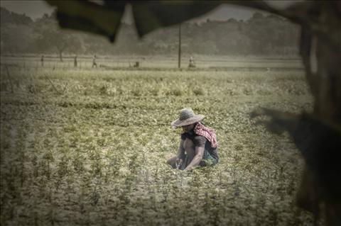 CATEGORY / THEME: DREAM || THE FARMER ||