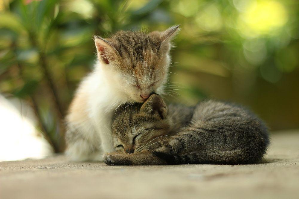 Caring kitten