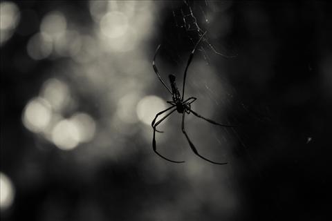 Web designer of the jungle