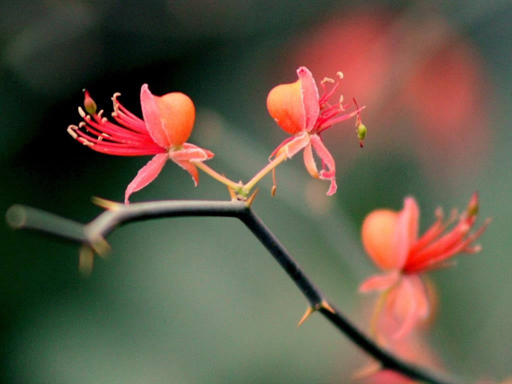 cap flower