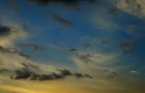 Near the big sky