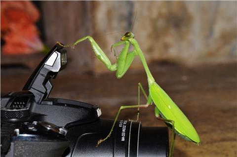 Grasshopper looks surprised