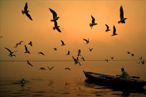 Birds-Boat-Beneras