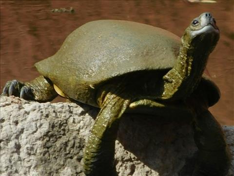 the+confident+tortoise