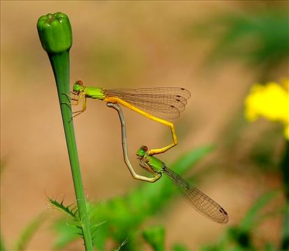Dragon Fly...