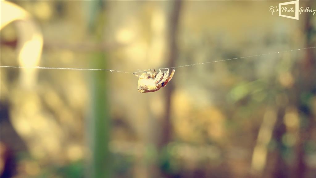 Spiderman on action