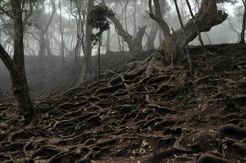 Beautiful Tree Roots