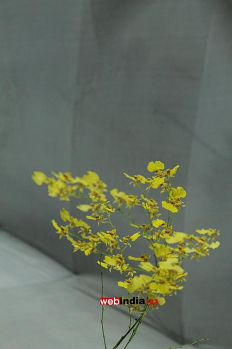 Dancing Lady Orchid (Oncidium spp.)