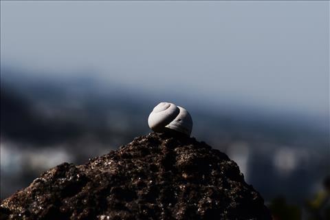 snail+on+the+rock