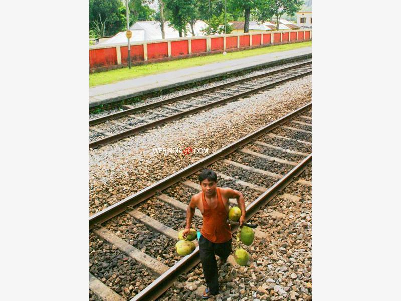 Coconut Seller