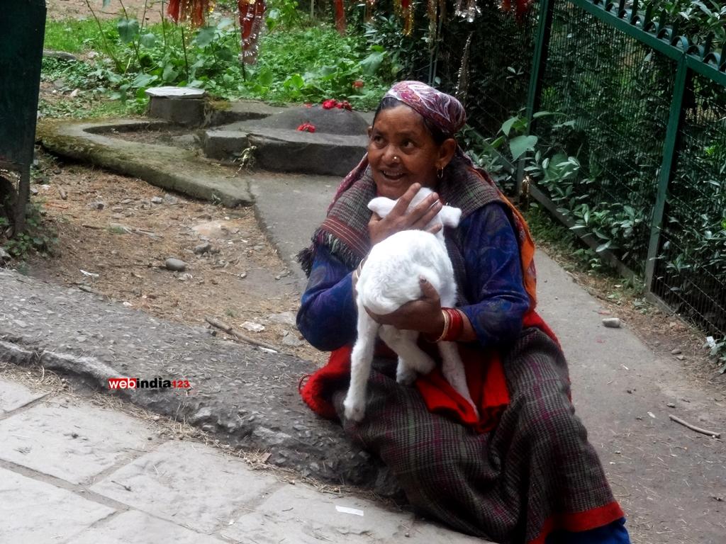 Woman With Angora Rabbits At Hadimba Manali