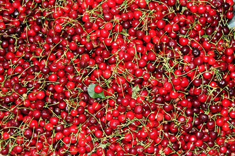 Cherries at Manali Shop