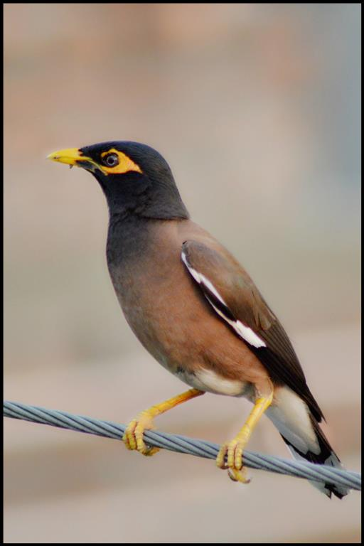 styles of bird