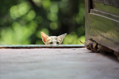 Peeking+Cat