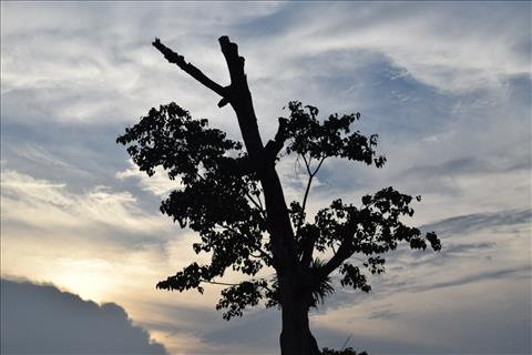 Lonely+Tree