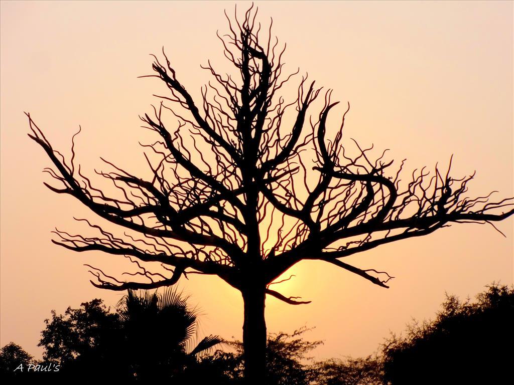 TREE IN A DESERT