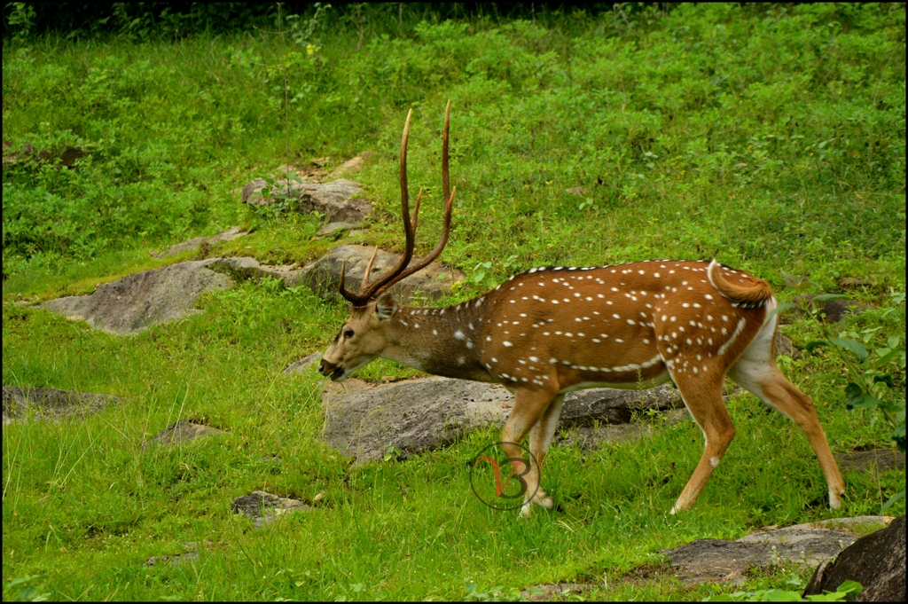 Parambikulam Tiger Reserve (Parambikulam Wildlife Sanctuary)