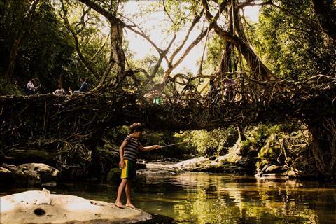Natures bridge