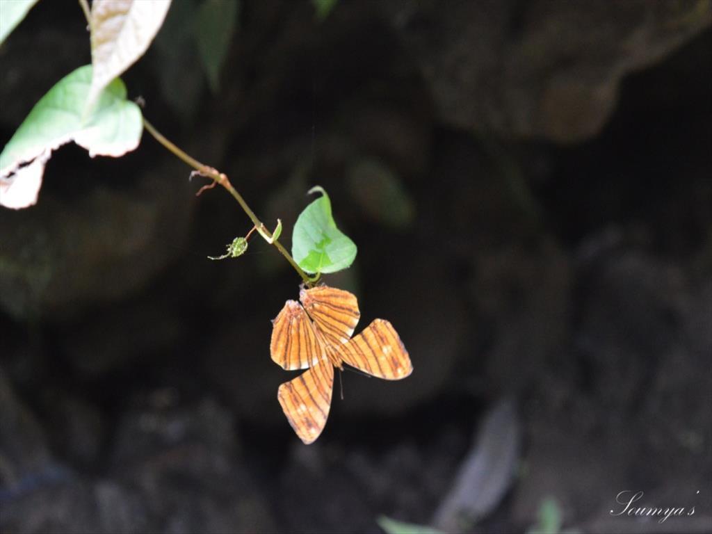 Butterfly Catch...
