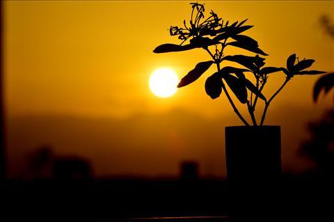 Golden+Sky