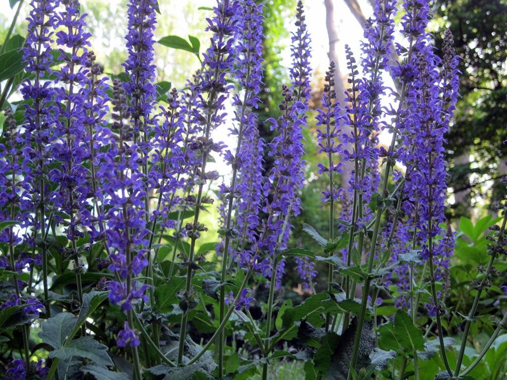 Lailac Colour Flower