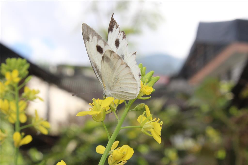 Beauty-Fly