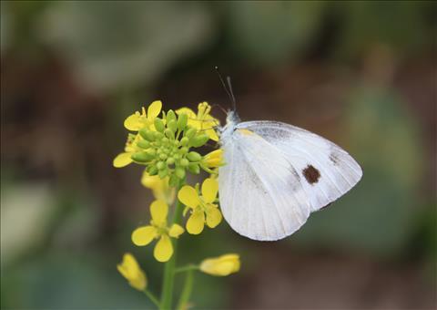 Beauty+of+a+butterfly