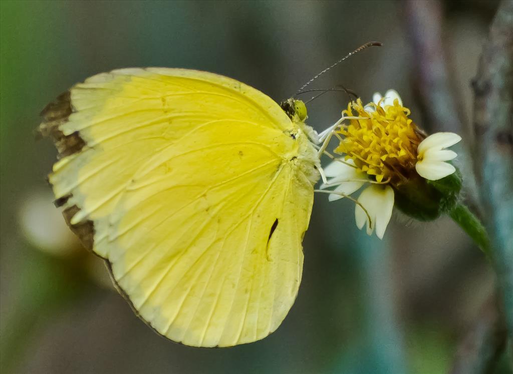 yellow cute wanderer