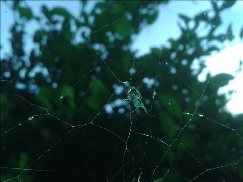 rain+on+spiderweb