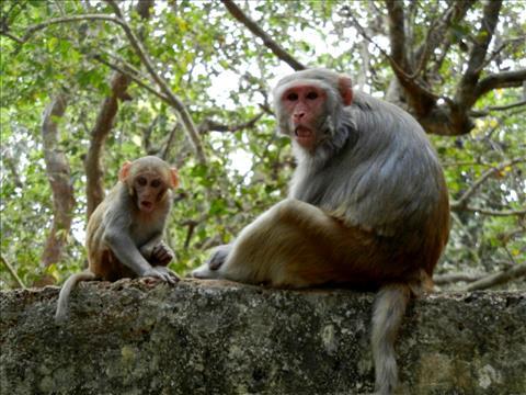Monkey+Look