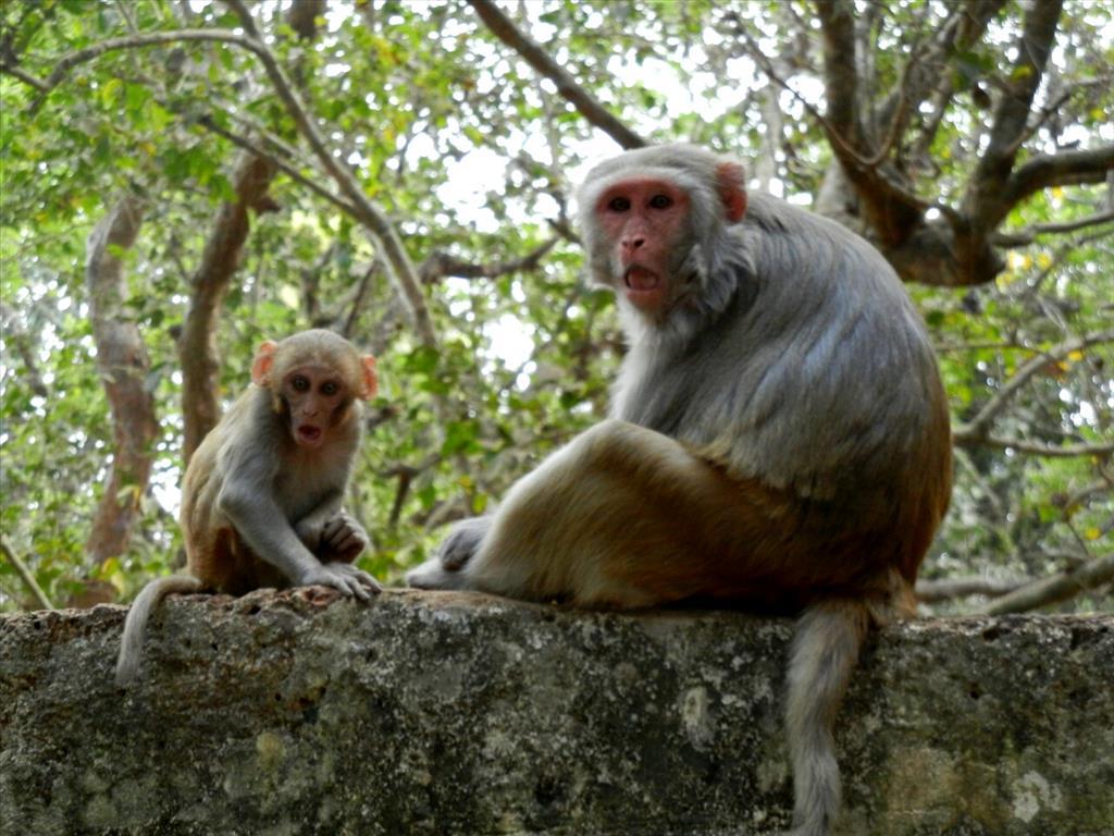 Monkey Look