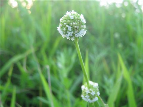 Beauty+of+Flower