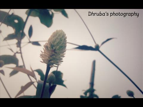 First photography
