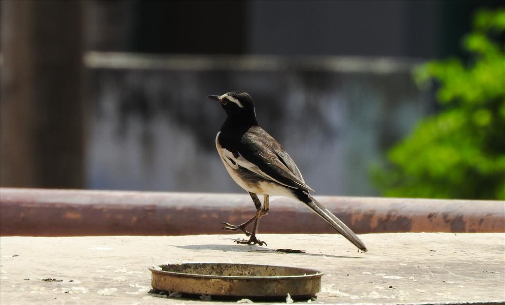 The bird in my wall