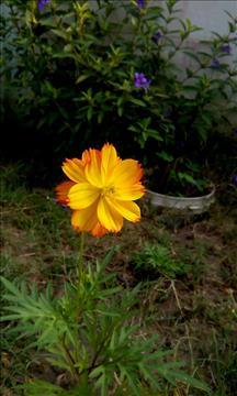 fresh+flower