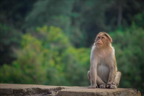 monkey+life
