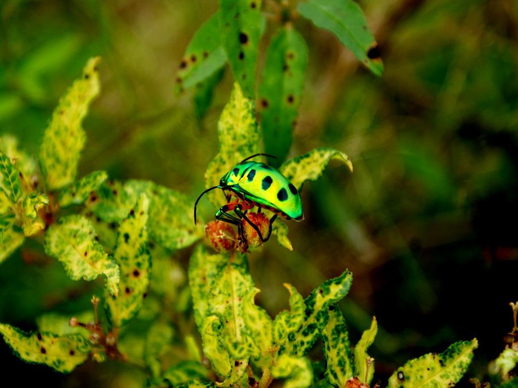 Bug found!