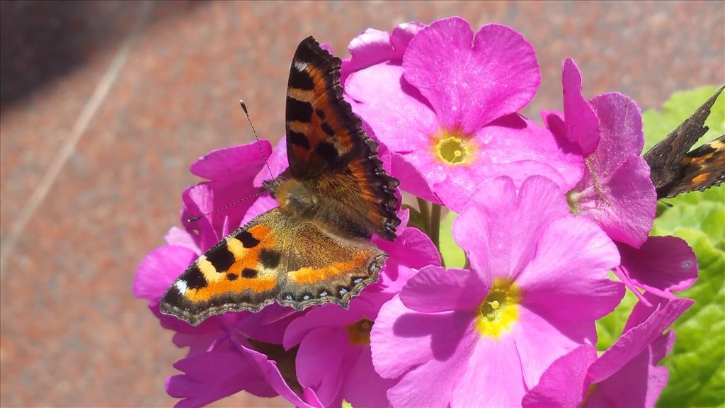 In Flowers Lap